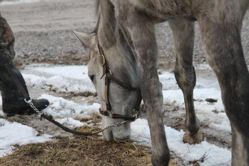 detroit-iron_20110128_111