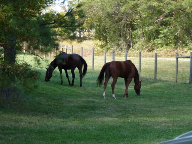 trail-ride-julies_20111008_202