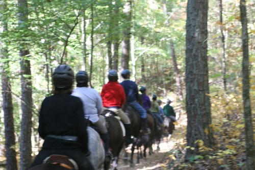 Eight horse from Bits & Bytes Farm on a trail ride