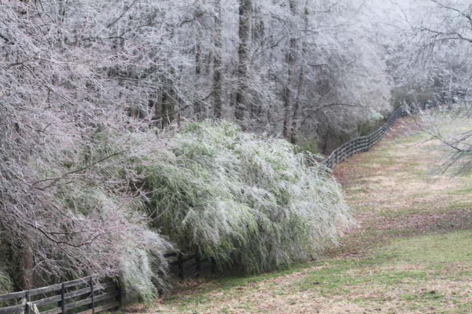 ice-storm20150216-17_20150217_023