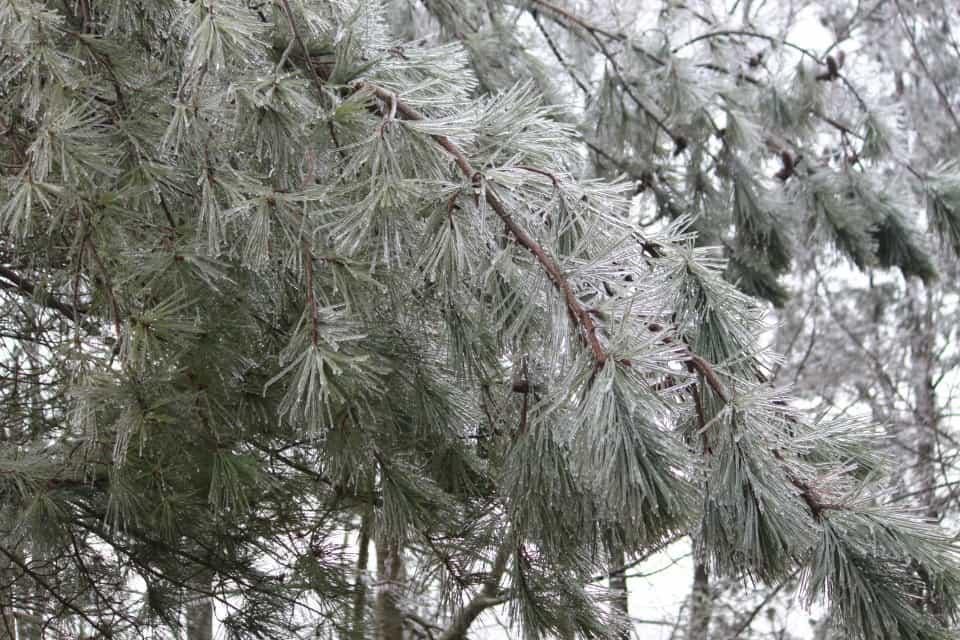 ice-storm20150216-17_20150217_029