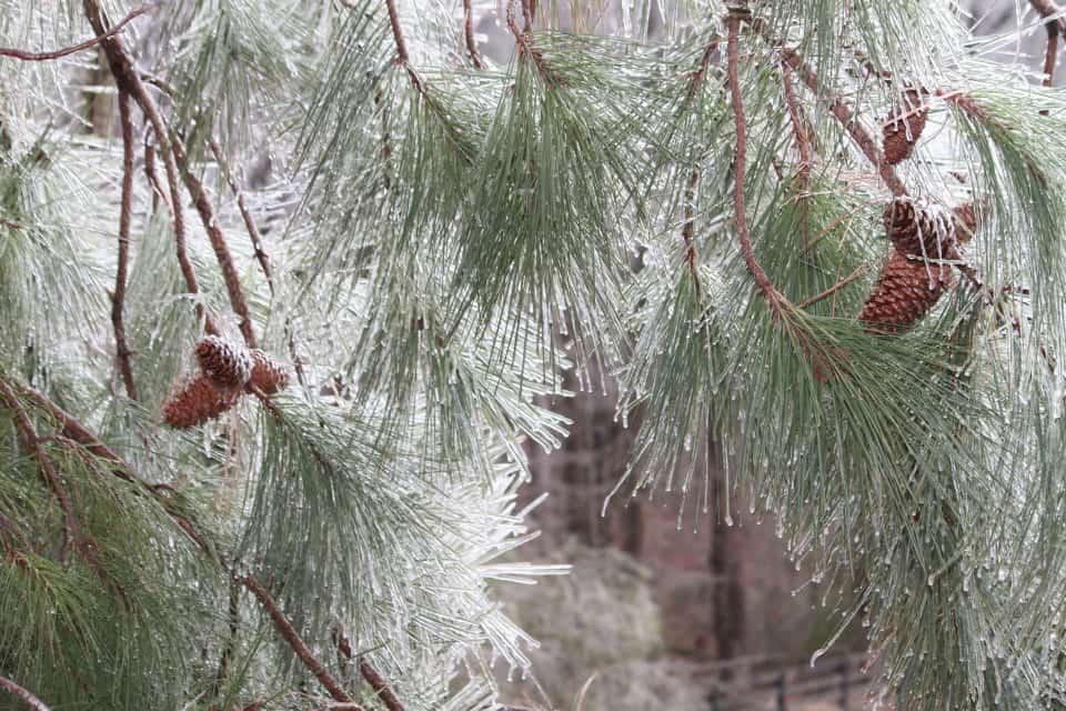 ice-storm20150216-17_20150217_035