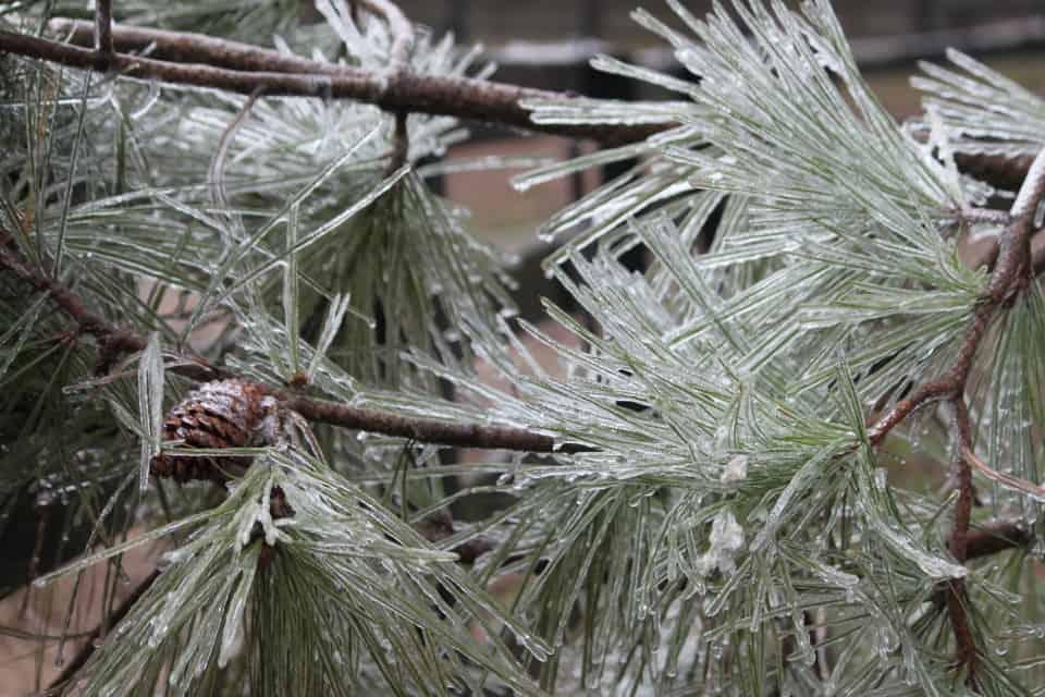 ice-storm20150216-17_20150217_037