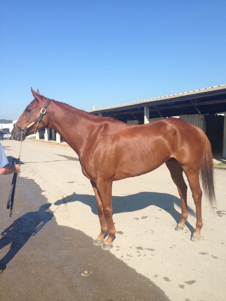 Indiana Rib is a Thoroughbred who was sold by Bits & Bytes Farm