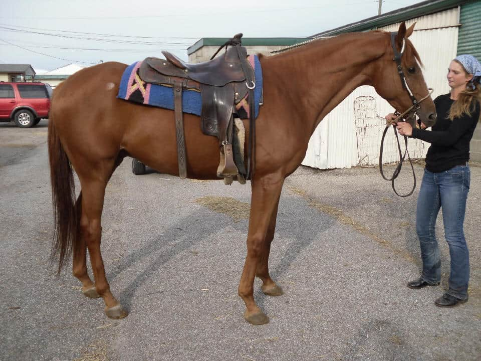 Mulle - 16.3 hand Thoroughbred horse