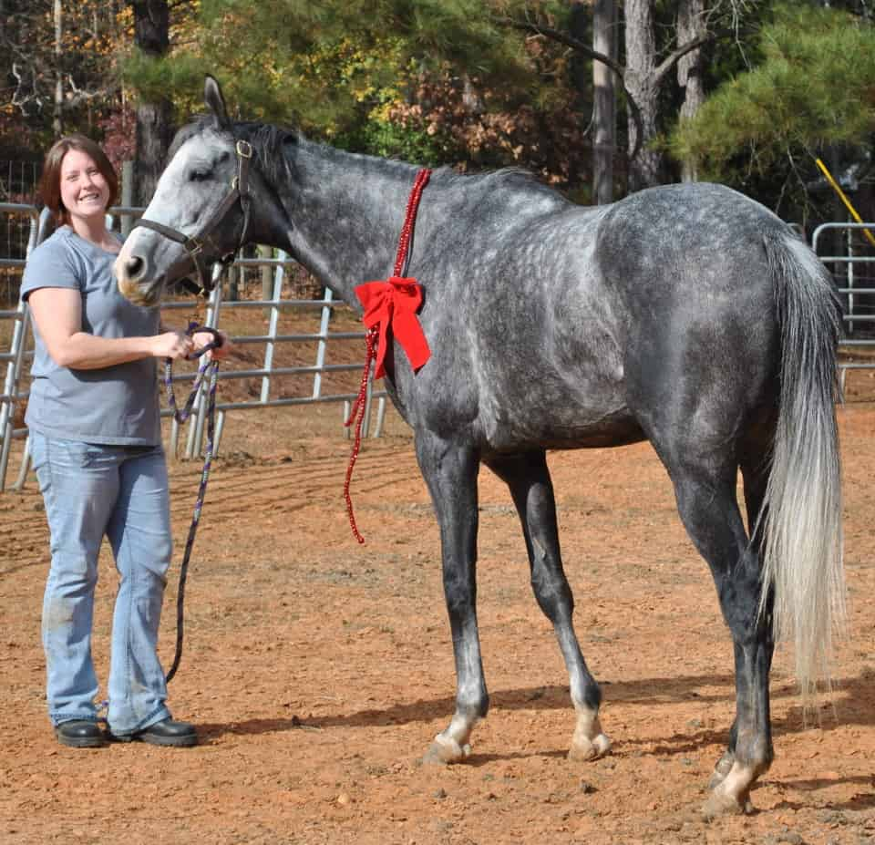 My Isabell was a Thoroughbred horse for sale in November 2012 on our Web site.