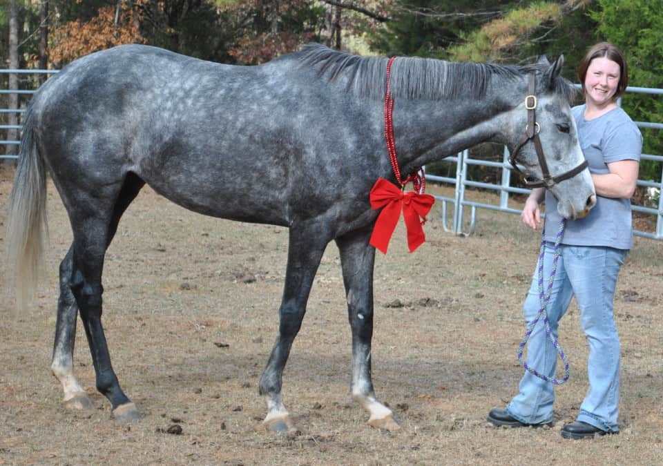 My Isabell is a grey Thoroughbred horse for resale