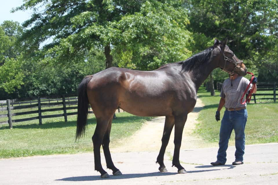 Tenth Night is a Thoroughbred sold by Bits & Bytes Farm in August 2015