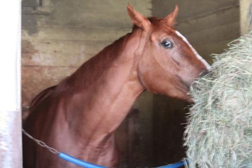 Belmont Park stables