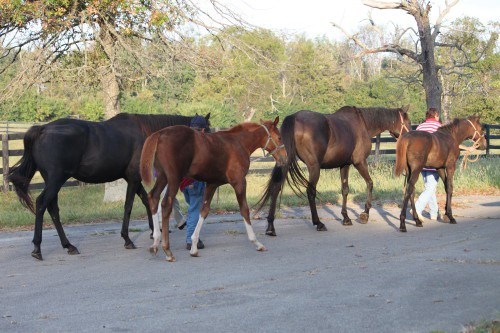 Babies at the Kentucky Breeding farm