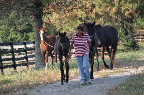 Thoroughbred foals in Kentucky
