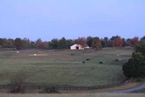 Kentucky Breeding farm