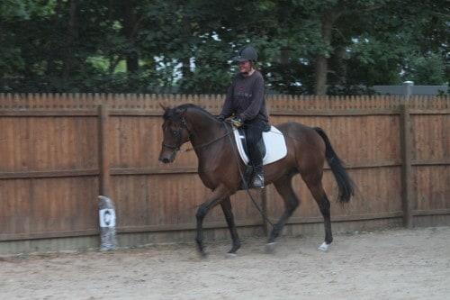 Ex-race horse Little Silic