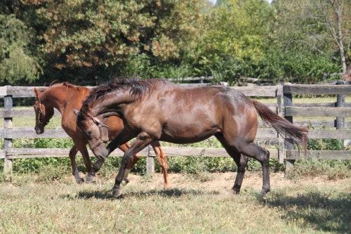 Future Prospect Horses