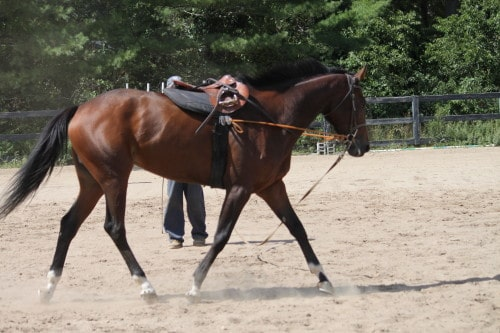 Tax Hike aka Prospect Horse