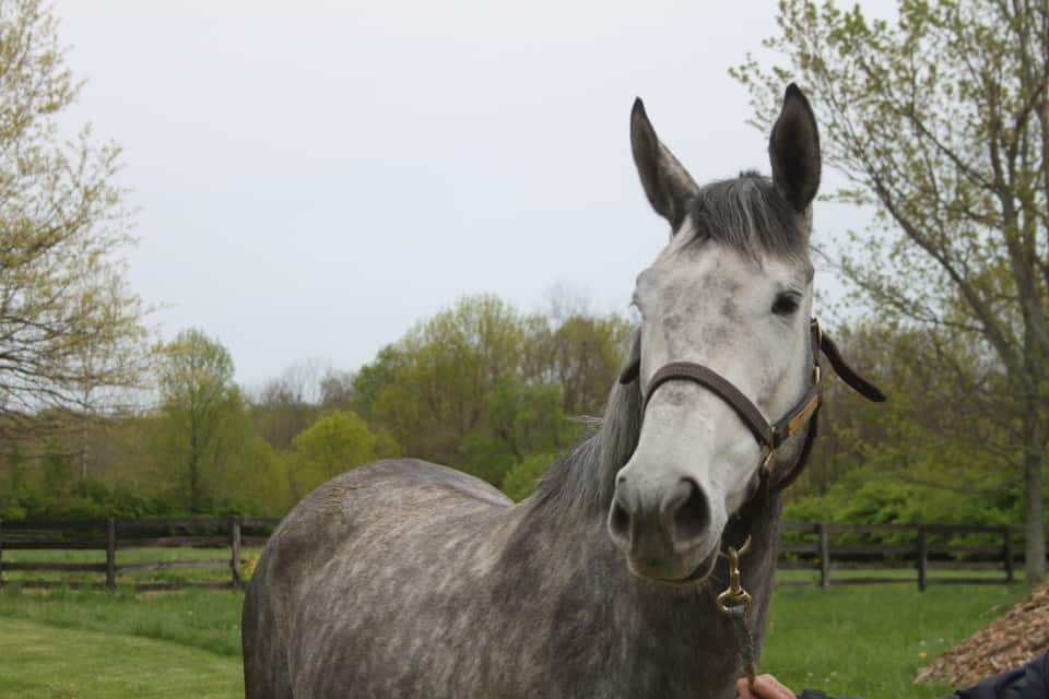 Passion Directed - Thoroughbred horse sold by Bits & Bytes Farm