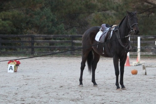 Popular Five is a horse for sale at Bits & Bytes Farm