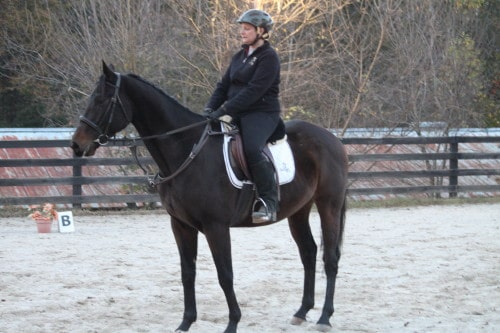 Popular Five is a Thoroughbred horse for sale at Bits & Bytes Farm