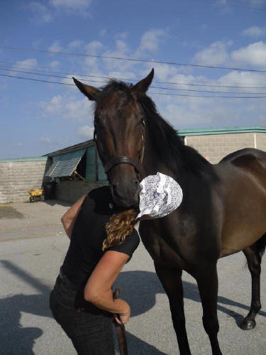 Popular Five - Thoroughbred horse for sale - SOLD!