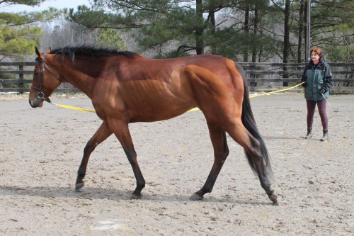 Reign Day Lunging