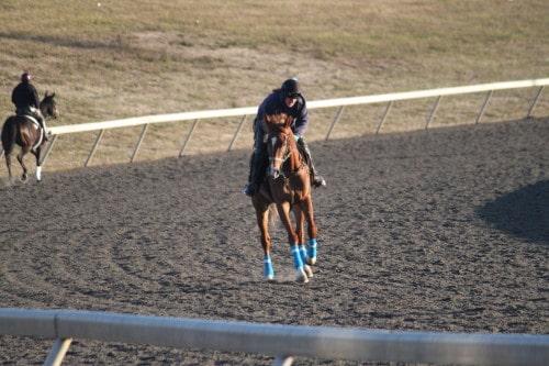 running-tall_20101108_029