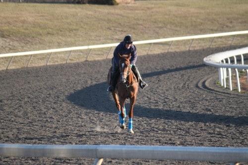 running-tall_20101108_030