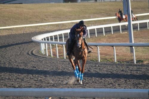 running-tall_20101108_031