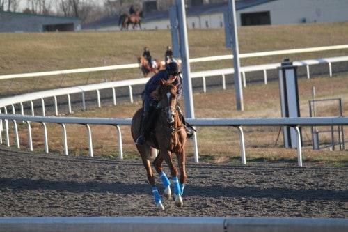 running-tall_20101108_033