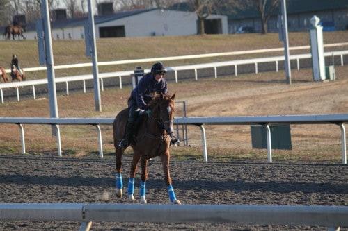 running-tall_20101108_034