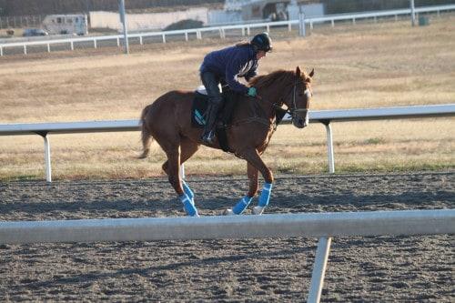 running-tall_20101108_036