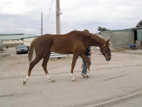 running-tall_20110216_016