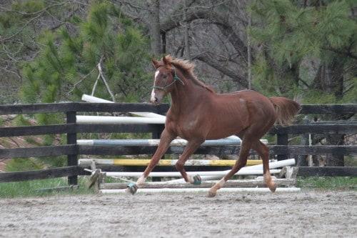 running-tall_20110308_030