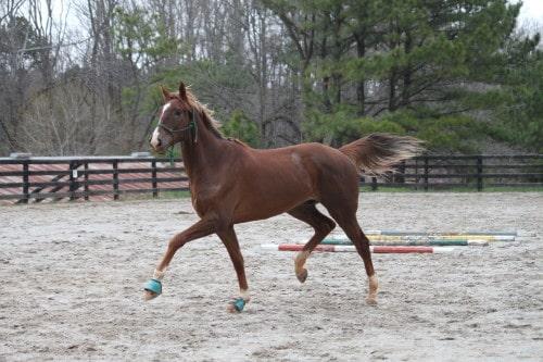 running-tall_20110308_037