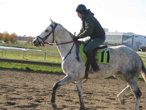 Silverrod\'s Kate