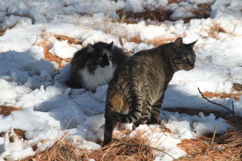 Baroness and BB check out the snow