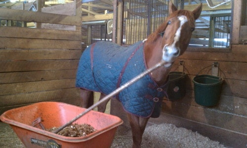 Lucky helps out cleaning stalls