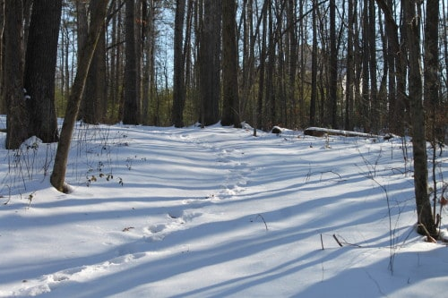 Our trails through the woods covered in snow