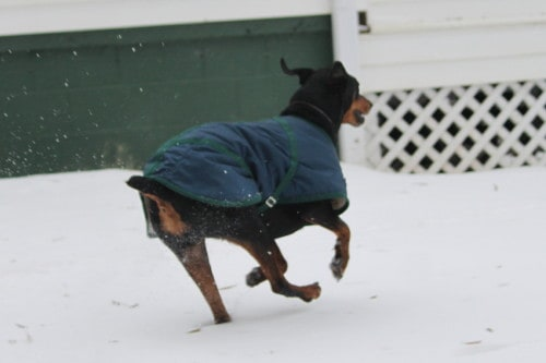 Roo Roo in the snow