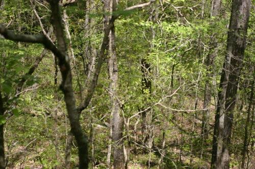 trail-ride-garland-mt_20110417_028