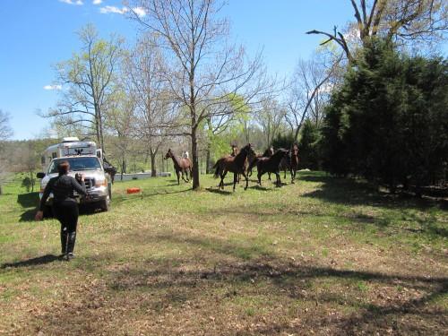 trail-ride-julies_20110309_06
