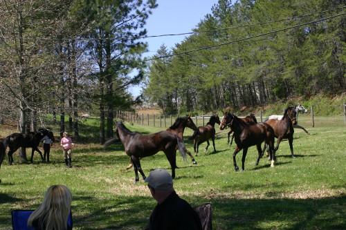trail-ride_20110402_085