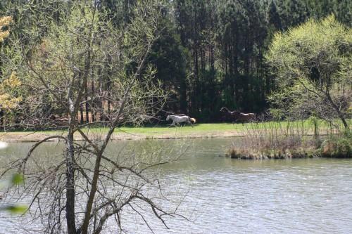 trail-ride_20110402_101