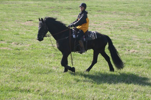 trail-ride_20100327_011