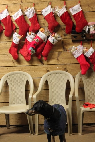 The horses stockings were hung by the wash rack with care . . .