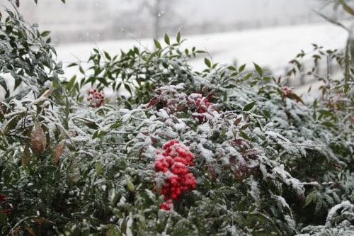 white-christmas_20101225_007