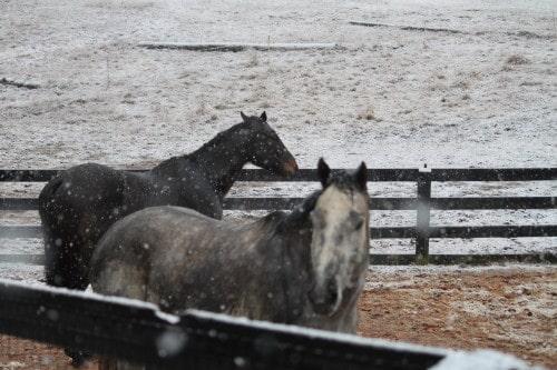 White Christmas at Bits & Bytes Farm