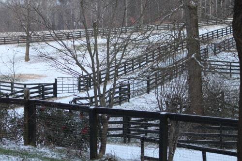 snow_20100108_02t