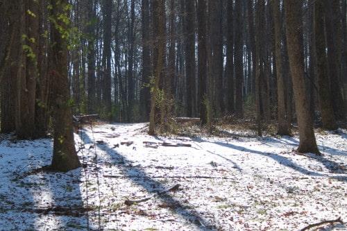 snow_20100110_034