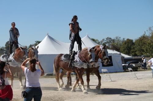 Demonstrations in the Equine Village