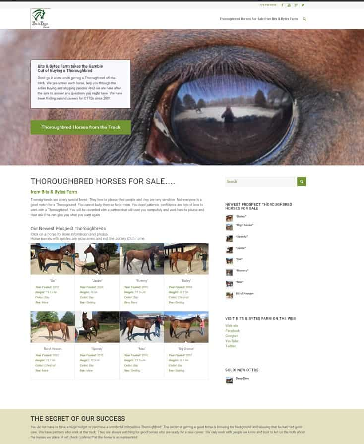 Visit our newest web site: www.thoroughbred-horses-for-sale-web-site to see our Prospect Horses